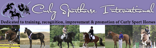 Curly Sporthorse International
